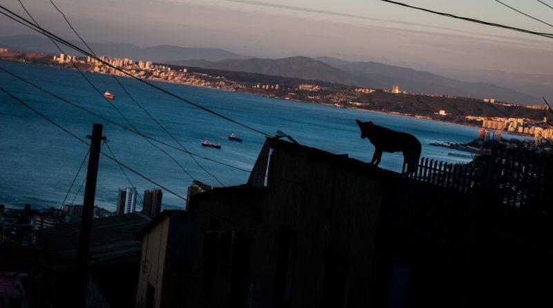 Toma Violeta Parra - Valparaiso - HC - 01